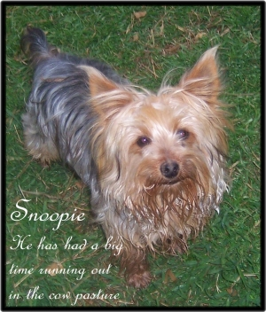 Snoopie Jr placed in a home