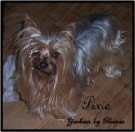 Pixie placed in a home