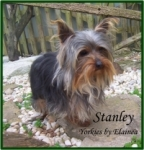 Stanley placed in a home