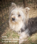 Willie placed in a home