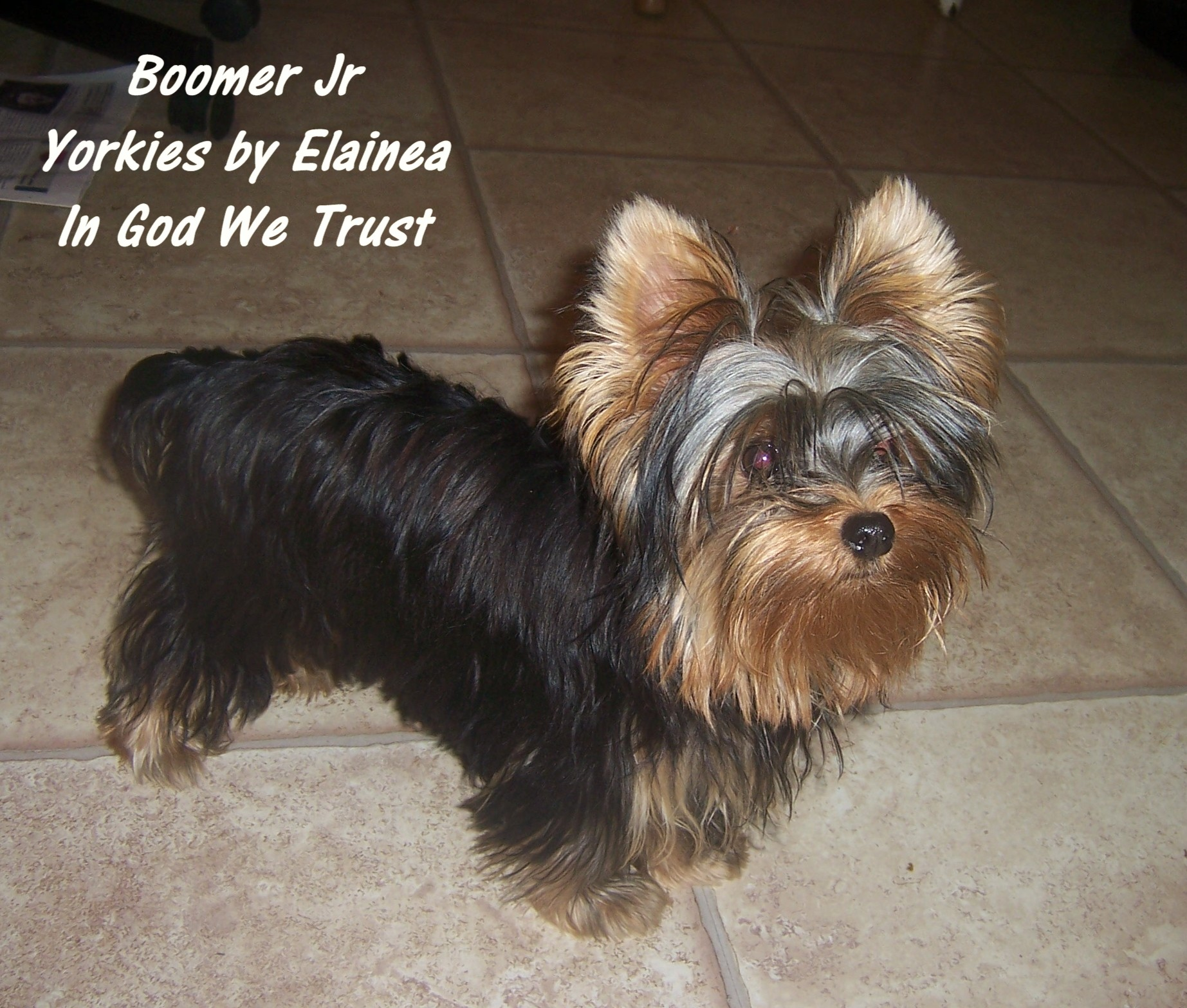 Boomer Jr placed in a home