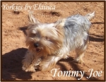 Tommy Joe placed in a home